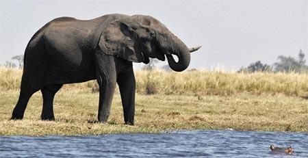 Chiêm bao thấy voi uống nước