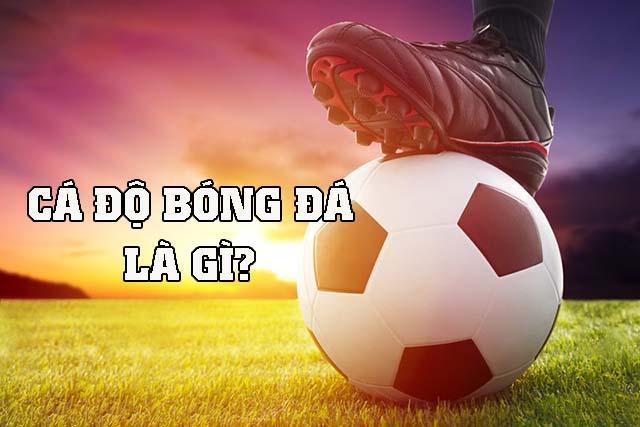 Cá độ bóng đá là gì?